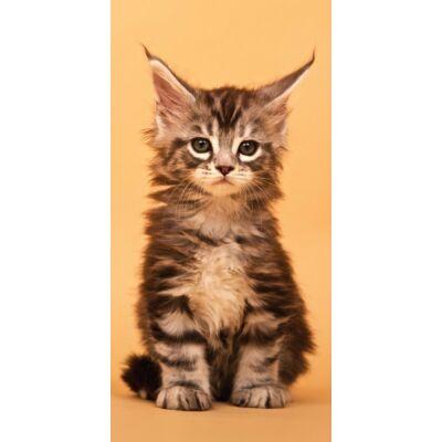 cicás, macskás ürdőlepedő pamut n